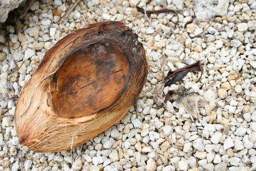 Coconut shell4x6